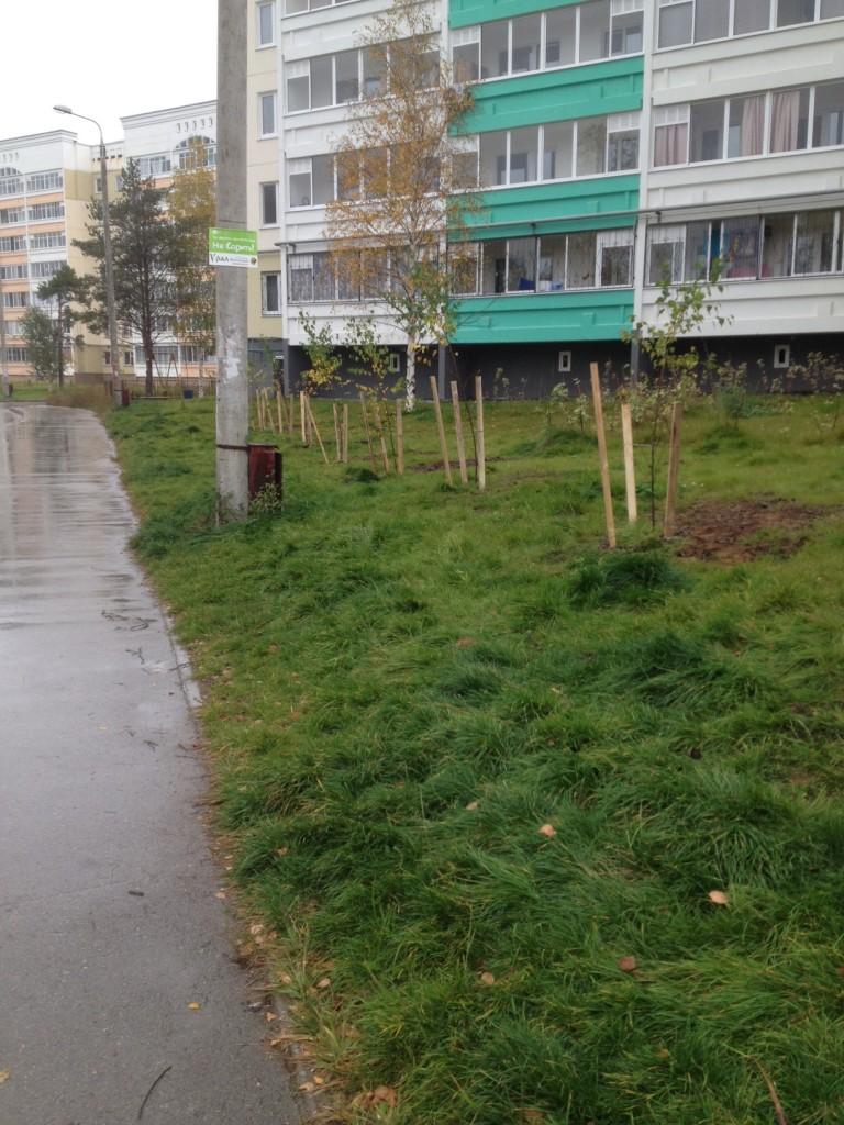 деревья1